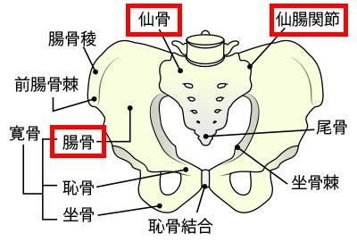 札幌の仙腸関節痛治療|札幌西区琴似 てて整骨院